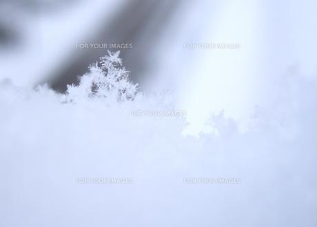 雪の結晶のツリーの素材 [FYI00180416]