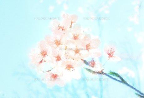 さくらイラスト ステンドグラス風の写真素材 [FYI00180484]