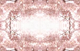 桜のフレーム イラストの写真素材 [FYI00180505]