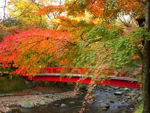 赤い橋の写真素材 [FYI00180560]