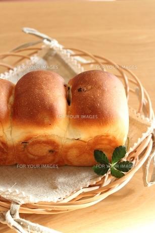 レーズン食パン。の写真素材 [FYI00180561]