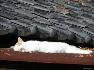 おひるね猫の写真素材 [FYI00180571]