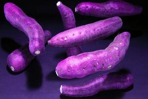 Purple Purple!!の写真素材 [FYI00180815]