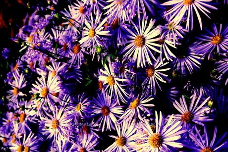 花の群れの素材 [FYI00180825]