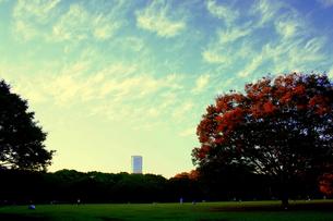 秋を迎えた代々木公園の素材 [FYI00180869]