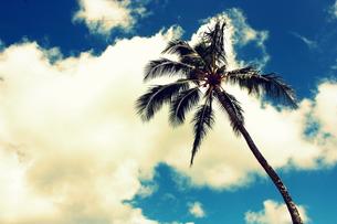 天に向かって伸びるヤシの木の写真素材 [FYI00180887]