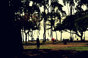 大木の蔦で遊ぶ子供の写真素材 [FYI00180900]