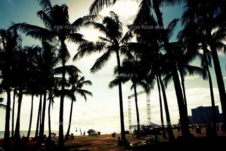 ハワイのヤシの木々と青空の素材 [FYI00180907]