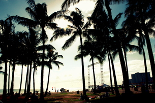 ハワイのヤシの木々と青空の写真素材 [FYI00180907]