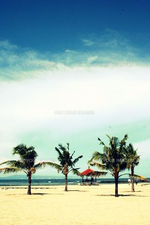 バリ島のビーチとヤシの木の素材 [FYI00180927]