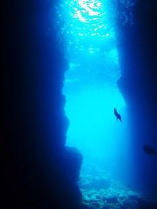 青の洞窟(水中の青)の写真素材 [FYI00181023]