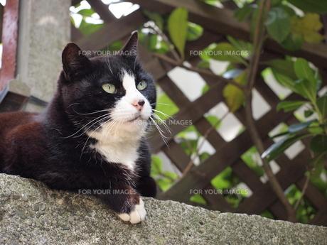 *前向きな猫*何見てるの?*の写真素材 [FYI00181040]