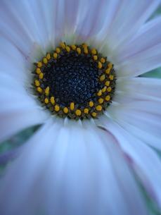 お花のドアップの素材 [FYI00181111]