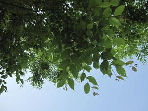 葉っぱと空の素材 [FYI00181157]