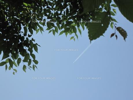 飛行機雲を見上げるの素材 [FYI00181158]