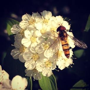 蜂の素材 [FYI00181210]