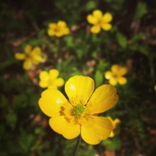 黄色い花の素材 [FYI00181214]