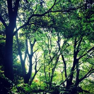 木々の素材 [FYI00181234]