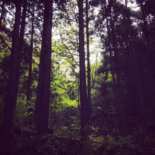 森林の素材 [FYI00181242]