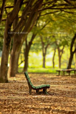秋のベンチの写真素材 [FYI00181307]