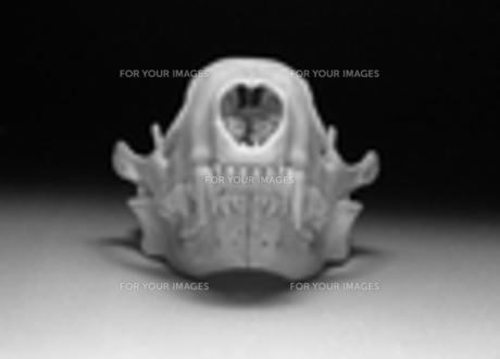 骨の写真素材 [FYI00181627]