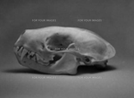 骨の写真素材 [FYI00181638]