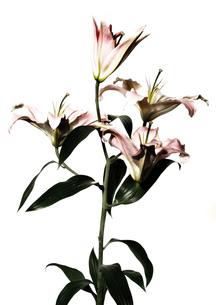 Flowerの写真素材 [FYI00181649]