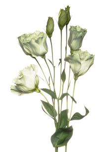 Flowerの写真素材 [FYI00181654]