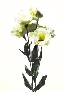 Flowerの写真素材 [FYI00181657]