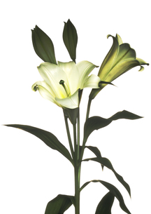 Flowerの写真素材 [FYI00181659]