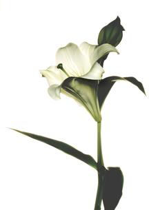 Flowerの写真素材 [FYI00181665]