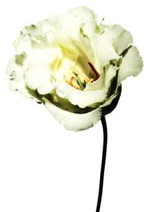 Flowerの写真素材 [FYI00181666]
