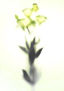 Flowerの写真素材 [FYI00181667]