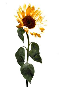 Flowerの写真素材 [FYI00181668]