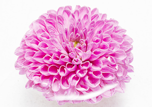 flowerの写真素材 [FYI00181671]