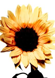 Flowerの写真素材 [FYI00181674]