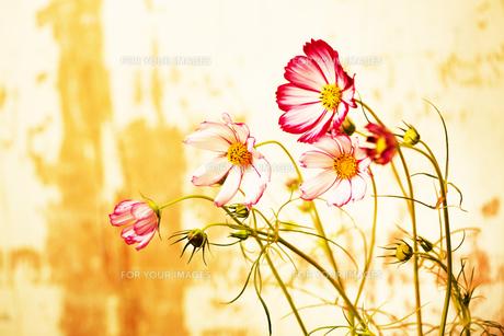 flowerの写真素材 [FYI00181682]