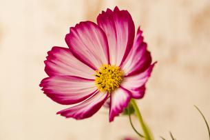 flowerの写真素材 [FYI00181687]