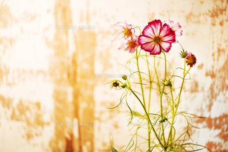 flowerの写真素材 [FYI00181688]