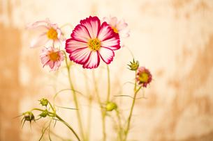 flowerの写真素材 [FYI00181700]