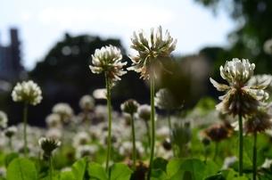 背の高いどこかの花の写真素材 [FYI00181931]