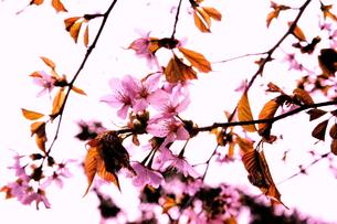 花の写真素材 [FYI00181936]