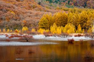 湿原の紅葉の写真素材 [FYI00181950]