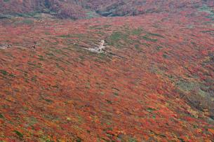 山の紅葉の写真素材 [FYI00181956]
