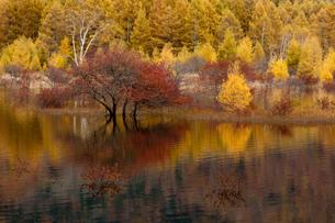 秋の湿原の写真素材 [FYI00181962]
