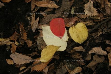 大分県 大船林道の落ち葉の写真素材 [FYI00182072]