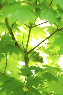 緑葉の写真素材 [FYI00182121]