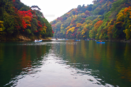 嵐山紅葉デートの写真素材 [FYI00185610]