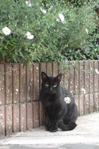 花と黒猫の写真素材 [FYI00185660]