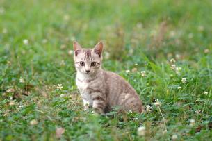 子猫の写真素材 [FYI00185672]